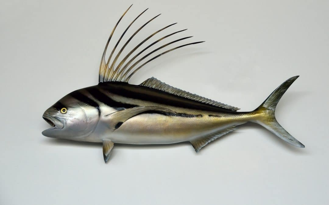 Roosterfish by Grand Solmar Vacation Club