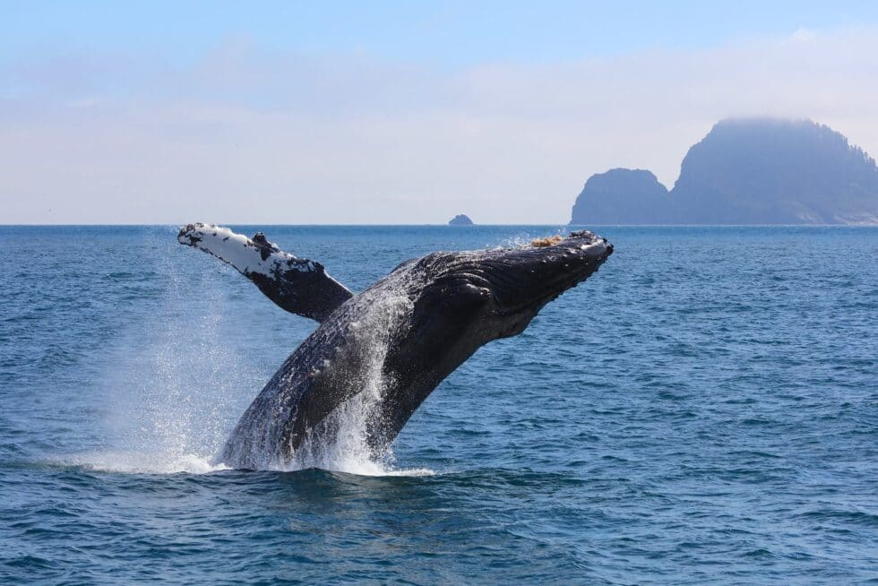 Make Whale Watching A Highlight of Your Los Cabos Vacation (4)