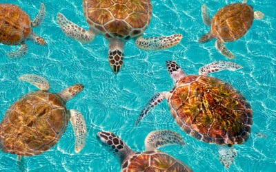 Grand Solmar Vacation Club Recommends Sea Turtle Nesting Experience for 2021