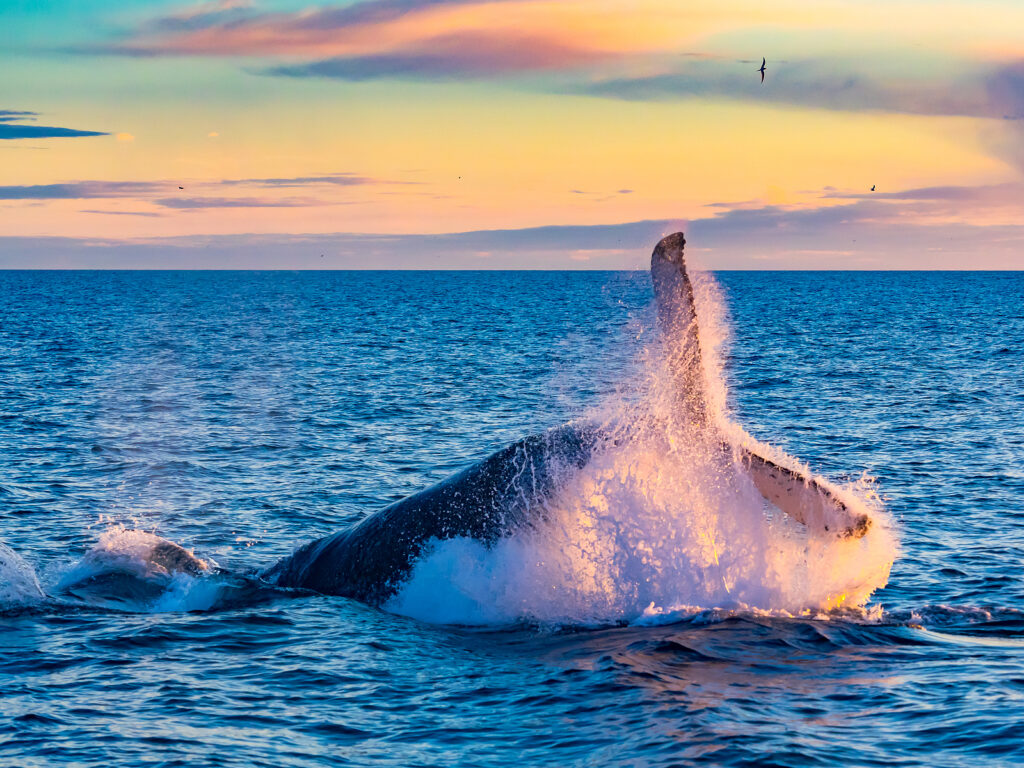 Whale at Cabo San Lucas , Grand Solmar Vacation Club